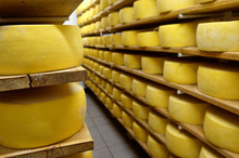 Cheese In Shelves