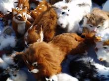 Home Made Fur Toys