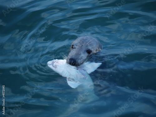 Acrylic Prints Polar bear Le phoque et le requin