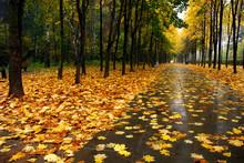 Autumn Alley.