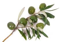 Olive 55