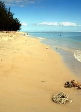 Plage Tropicale, Corail Et Lag...