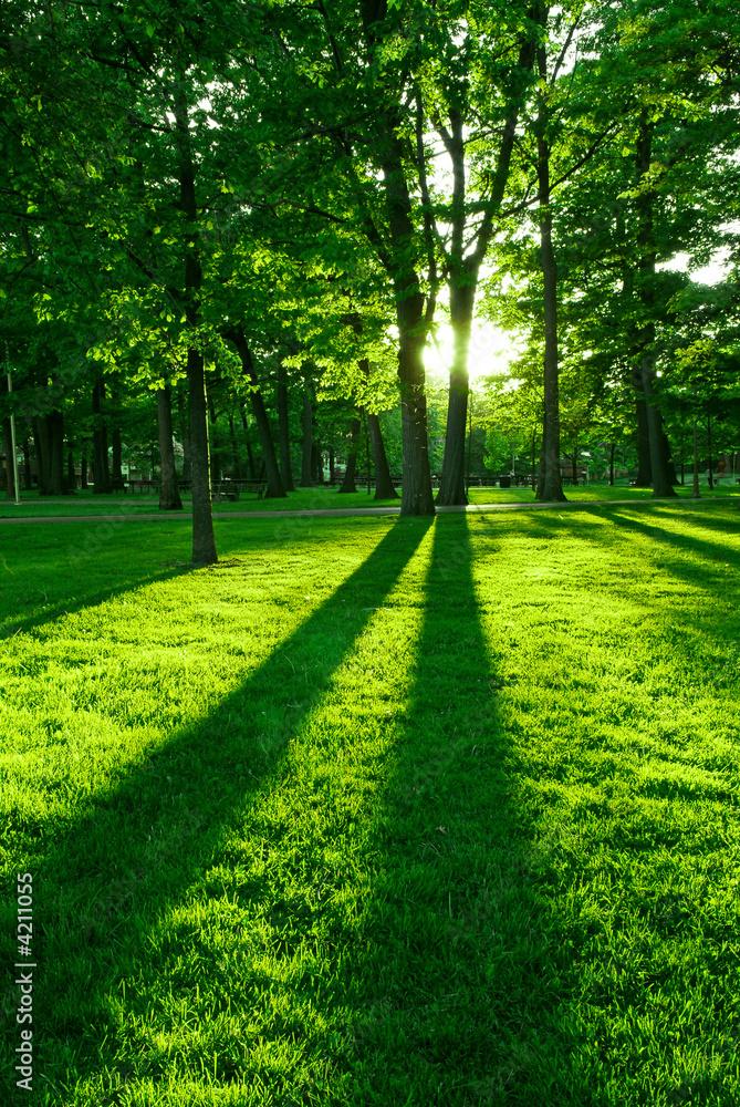 Fototapety, obrazy: Zielony park