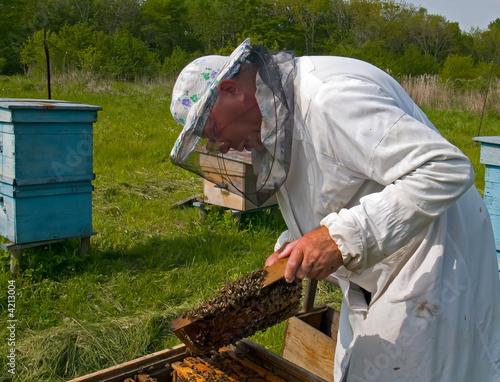 Egypt Beekeeper 8
