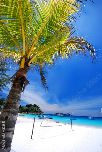 Foto Rollo Basic - Tropical beach (von Ronen)