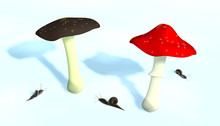 Two Mushrooms And Little Snails
