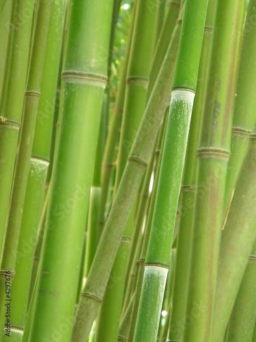 Printed kitchen splashbacks Bamboo bamboo grove.