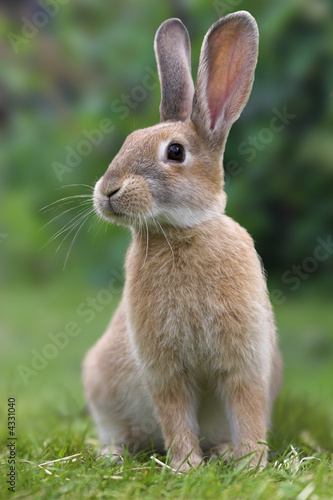 Rabbit Fototapet
