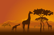 Silhouettes Of Giraffes In Nat...