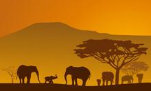 Silhouettes Of Elephants On Ba...