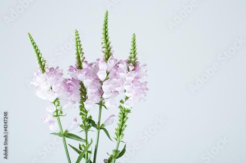 Foto op Canvas Lavendel Flowers branch