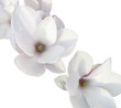 canvas print picture - Weiße Orchidee