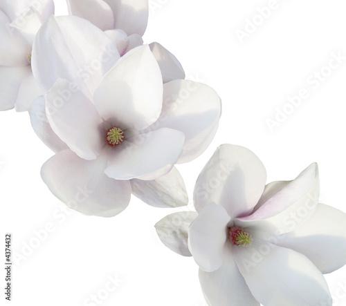 Foto-Schiebegardine ohne Schienensystem - Weiße Orchidee