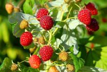 Sweet Raspberries