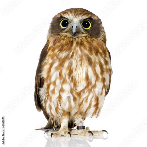 Deurstickers Uil New Zealand owl