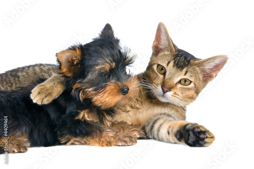 The puppy and kitten #4409464
