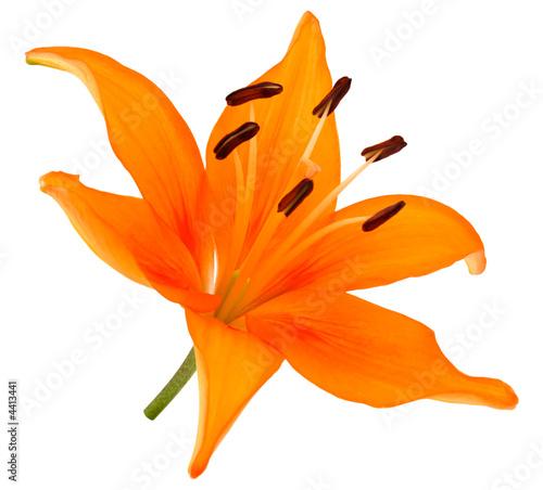 Fleur De Lys Orange Buy This Stock Photo And Explore Similar