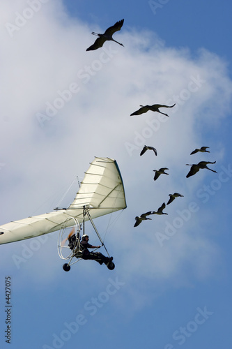 Spoed Foto op Canvas Luchtsport Flying with goose