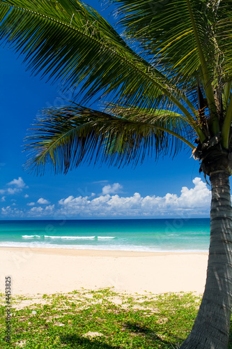 Foto-Schiebegardine Komplettsystem - Palm tree on a tropical beach