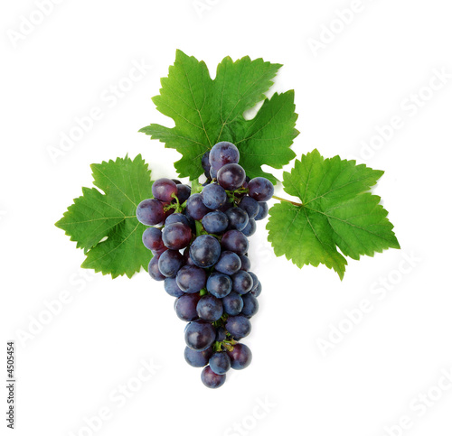 Fotografiet  Blue grape cluster with leaves