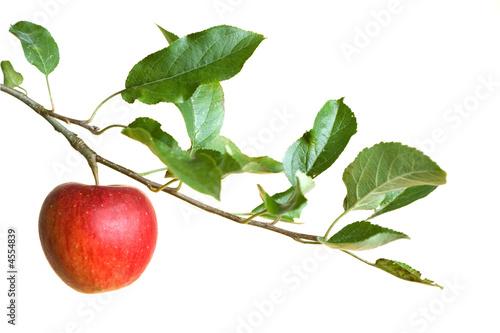 Foto apple on a branch