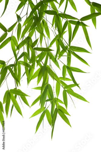 In de dag Bamboo bamboo- leaves