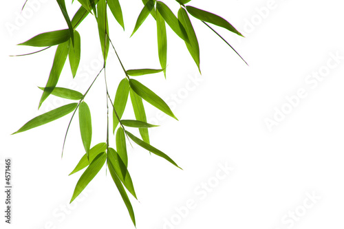 Foto-Duschvorhang - bamboo- leaves
