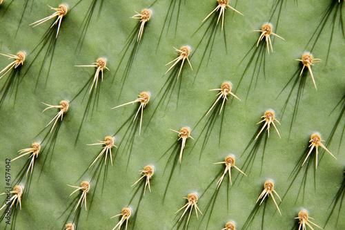 Stickers pour porte Cactus Prickly pear cactus