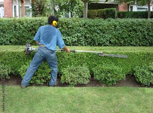 Papiers peints Jardin hedge trimming