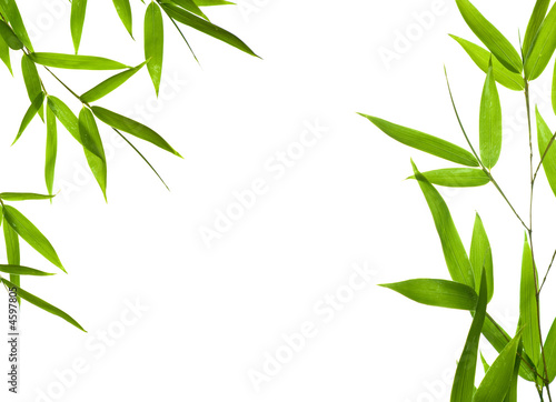 bamboo- leaves
