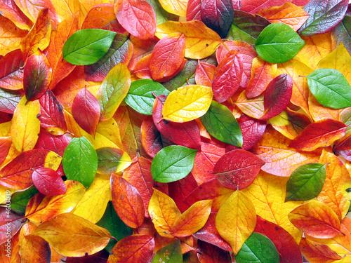 Doppelrollo mit Motiv - Bunter Blätterboden im Herbst (von Phimak)