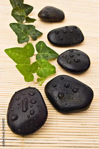 Doppelrollo mit Motiv - Spa stones and ivy (von Mihai Simonia)