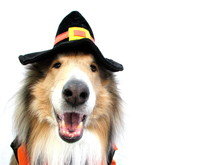 Collie In Halloween Costume