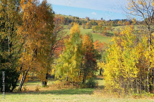 Photo Stands Road in forest Picturesque autumn landscape trees and bushes