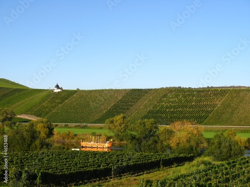 Fototapety, obrazy: Weinberg an der Mosel