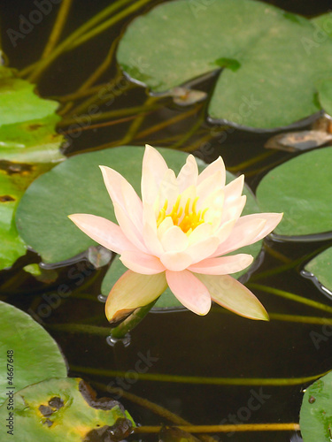 Photo Stands Water lilies Lotus