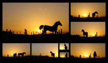 Horse Silhouettes At Sunset, C...
