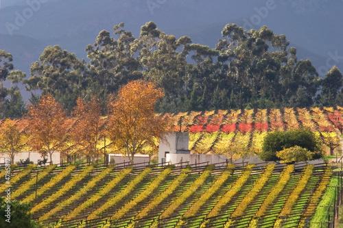 Foto op Plexiglas Zuid Afrika Vineyard landscape, Cape Town area, South Africa