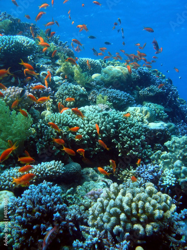 Poster Coral reefs Goldfish City