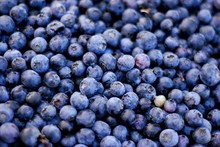 Blueberries At Farmers Market
