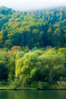 forest on the mosel
