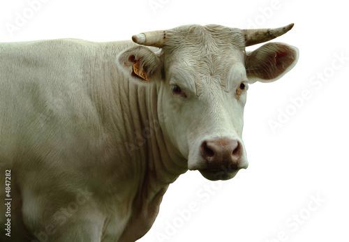 Poster de jardin Vache VACHE BLANCHE DETOUREE