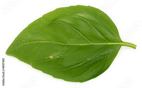 single basil leaf #4847460