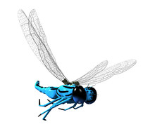 3D Dragonfly