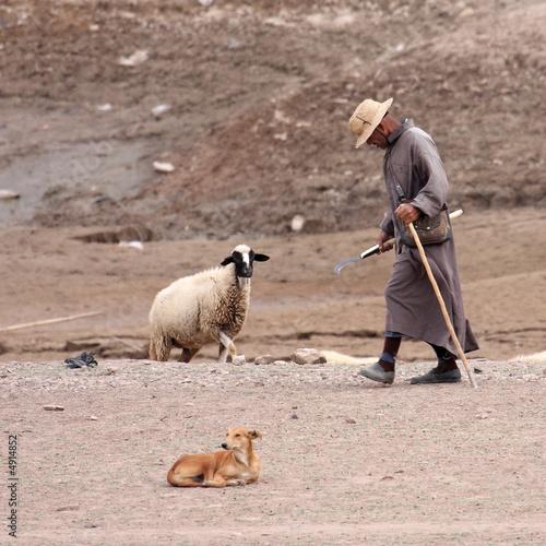 Photo  le vieil homme et le mouton