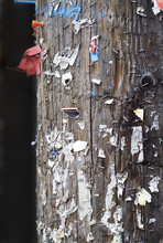 Staples On A Wooden Hydro Pole