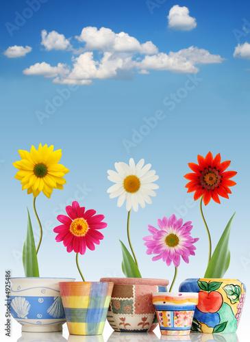 Fun daisies in pots Plakat