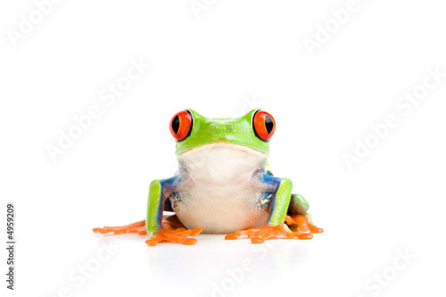 Tuinposter Kikker frog isolated on white