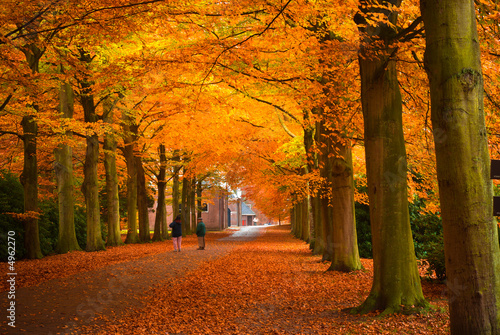 Poster Rood paars autumn in the forest
