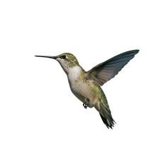 Flying Hummingbird Isolated On...